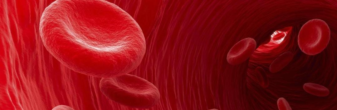 The spleen and its effect on red blood cells